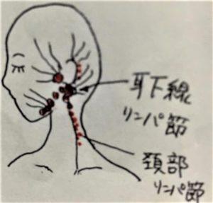 耳のあたりのリンパ図解