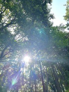 最近の日課 森林浴