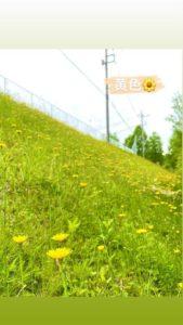 一面黄色 雑草だけど綺麗