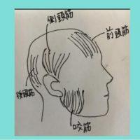 小顔になるために 顔の筋肉の位置